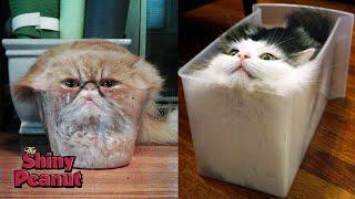 Video Apakah Kucing Benda Padat Atau Cair? MP3, 3GP, MP4, WEBM, AVI, FLV Maret 2019