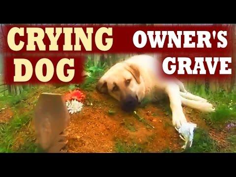 原本主人找到鬧失蹤的狗狗時還很生氣,但一看到他「堅持賴著不走的地方」時就徹底淚崩了!