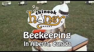 Beekeeping | Chinook Honey Company (2012)