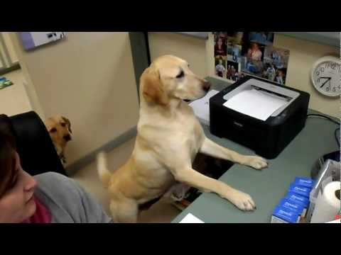 Dog Gives Receipt At Vets Office