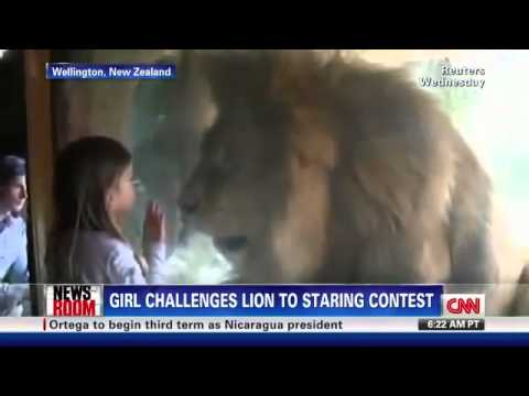 Una bambina indefferente ad un leone che cerca di attaccarla