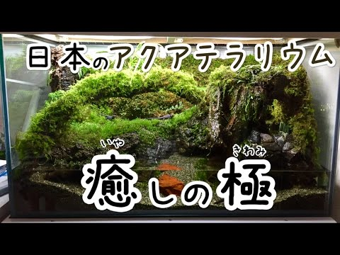 日本のアクアテラリウム 「これまでと、これから‥‥」