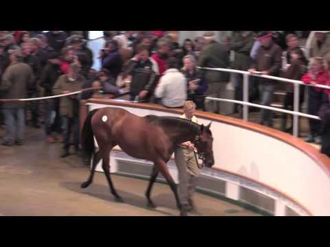 Lot 304 Dubawi Filly ex Loveisallyouneed Selling for 2.1m Guineas