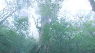 【Googleストリートビュー特集!】第3弾 もののけ姫の舞台となった屋久島が超神秘的