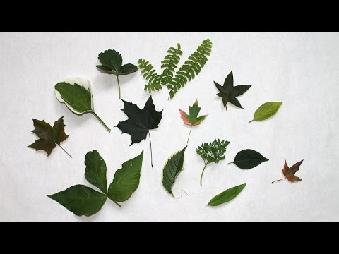 Comment faire s�cher des feuilles