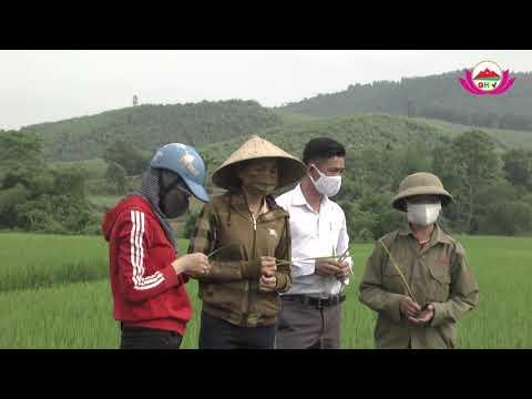 Quỳ Hợp chủ động phòng chống sâu bệnh cho lúa vụ Xuân