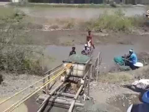 Manoj M Sharma shrimp farm harvesting the easy way
