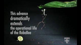 RoboBee to the Search & Rescue!