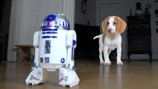 Cute Puppy vs. R2D2: Cute Puppy Potpie, Funny Dogs Maymo & Penny by Maymo