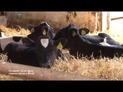 Cetri vrste silaze u ishrani krava i sta ce biti sa cenama mleka