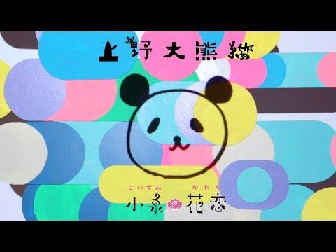 , title : '小泉花恋『上野大熊猫』MV'