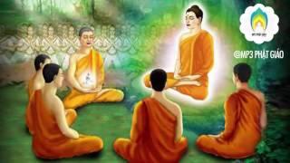 Những Lời Phật Dạy  Phàm Làm Việc Gì Trước Phải Xét Kỹ Đến Hậu Quả Của Nó Mời các bạn và quý phật tử cùng lắng nghe pháp âm -Những Câu Chuyện Nhân Quả Phật Giáo Mới Và Hay Nhất  -  , chúc các bạn và quý phật tử luôn hoan hỷ và an lạclike và đăng ký kênh để theo dõi video mới từ MP3 Phật GiáoNAM MÔ A DI ĐÀ PHẬT