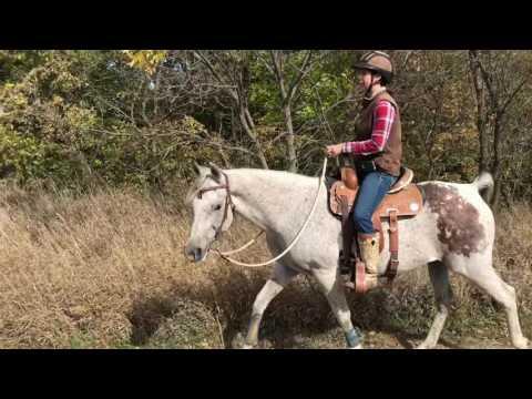 Sirocco - Groundwork, Saddlework & Trail Riding