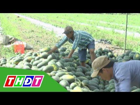Trung Quốc có xu hướng giảm nhập khẩu dưa hấu | THDT - Thời lượng: 2 phút.