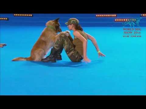 Pies robiący resuscytację krążeniową-oddechową na mistrzostwach świata HTM 2016