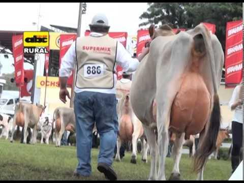 ganado leche - A continuación, un bloque sobre cómo se realiza el juzgamiento del ganado de leche en esta nueva edición 2014, de la Expo de Mariano R. Alonso.
