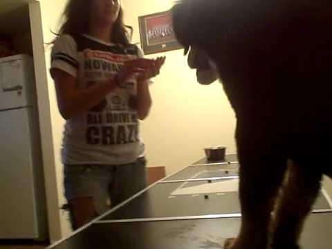 Beer pong table dog