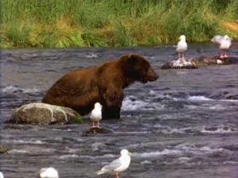 Man eaten by bear! SICK!