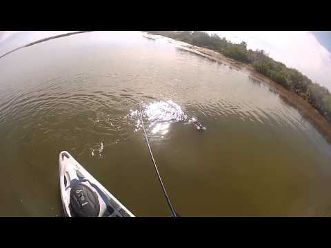 Lol... crazy redfish!  - kayak fishing, kayak photos, kayak videos