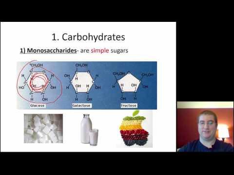 Carbohydrates & Lipids