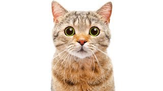 Video 25 BIZARRE Cat Facts You Need To Know MP3, 3GP, MP4, WEBM, AVI, FLV Desember 2018