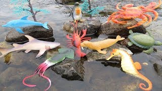 Video Learn Sea Animals Names For Children New Toy Videos For Kids Real Life Ocean Creatures Shark Turtle MP3, 3GP, MP4, WEBM, AVI, FLV Oktober 2017
