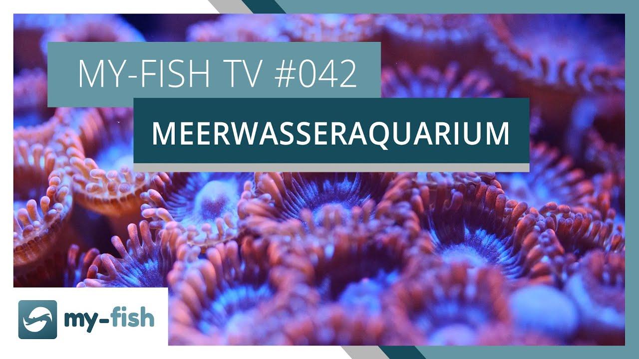 my-fish TV - Deine Nr. 1 Anlaufstelle für alle Themen rund um die Aquaristik 22