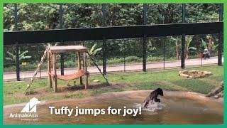 """Niedźwiedź spędził 9 lat w """"kamizelce tortur"""". Zobacz jego reakcję, gdy odkrywa wodę po raz pierwszy."""