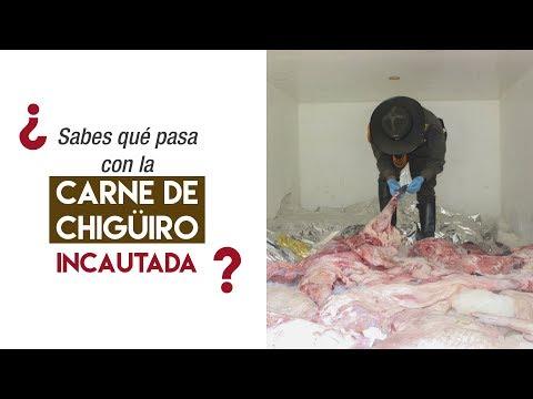 ¿Que pasa con la carne de chigüiro incautada?