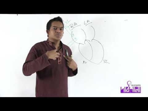 Download 07. The Heart | হৃদপিণ্ড | OnnoRokom Pathshala HD Mp4 3GP Video and MP3