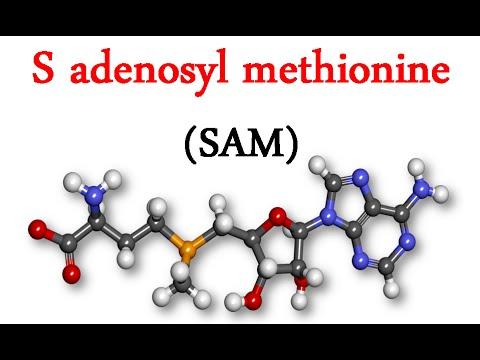 S adenosyl methionine (SAM)