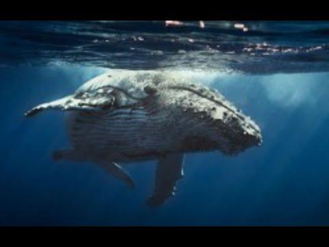 Iván Arenas muestra el increíble pene de una ballena azul