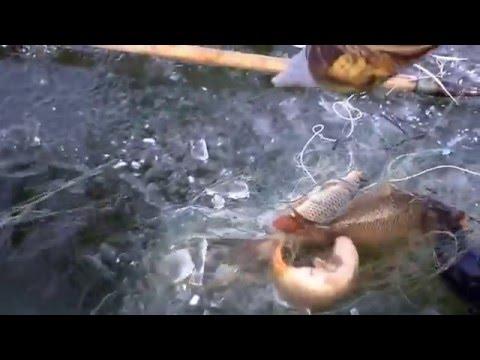 браконьерская рыбалка весной