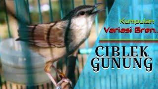 Download Video Kumpulan Variasi Irama Lagu | CIBLEK GUNUNG MP3 3GP MP4