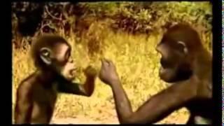 Vida del australopithecus africanus