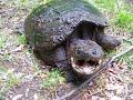 Enlace a Esta tortuga parece un poco cabreada