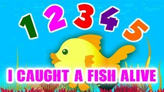 Learn the numbers from 1 to 10 in this colorful video which features the nursery track 12345 Once I caught a fish alive.One, two, three, four, five,Once I caught a fish alive,Six, seven, eight, nine, ten,Then I let it go again.Why did you let it go?Because it bit my finger so.Which finger did it bite?This little finger on the right.One, two, three, four, five,Once I caught a fish alive,Six, seven, eight, nine, ten,Then I let it go again.Why did you let it go?Because it bit my finger so.Which finger did it bite?This little finger on the right.Children Rhymes is an online portal which has the collection of the traditional rhymes in beautiful 3D animations and colorful clips.A one stop destination for your toddlers where they can read, learn and sing along!  For More Updates:►Subscribe to https://www.youtube.com/kidse3►Like us on  https://www.facebook.com/kidse3►Circle us @ https://plus.google.com/+kidse3/posts