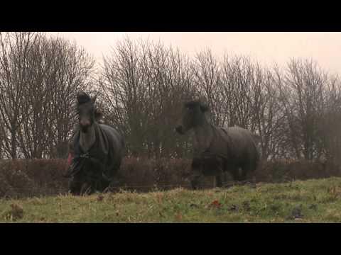 cavalli che non si rivedono da 4 anni, quando si incontrano di nuovo...