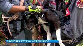 Cachorra é resgatada com vida de penhasco