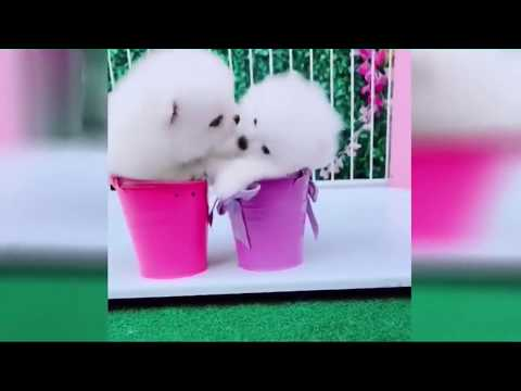 2019「絶対笑う」最高におもしろ犬,猫,動物のハプニング, 失敗画像集 #7 - Thời lượng: 11:19.