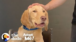 Puppy Who Eats In A High Chair Is Looking For His Forever Family | The Dodo Adopt Me! by The Dodo
