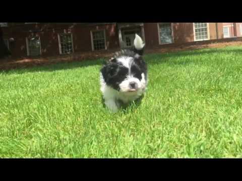 Bailey is a super soft wonderful puppy