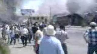 Драка петухов один на один жестоки бой зрител киргиз узбек