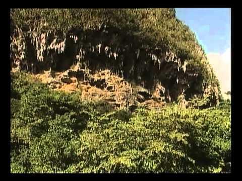 Der tropische Wald: Ein Paradies in Gefahr.