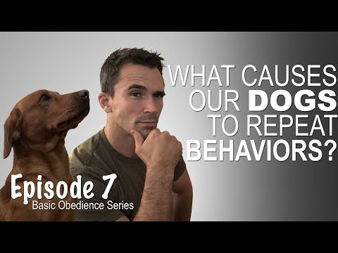 What causes a dog to repeat a behaviors? Episode 7