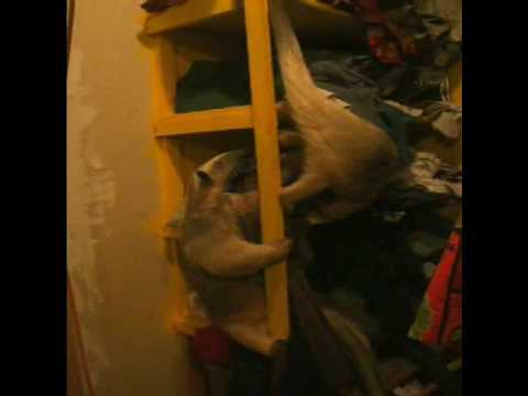utube funny animal videos. Categories: Misc Funny Animal
