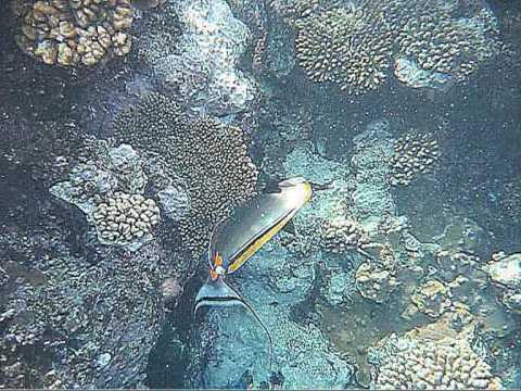 rafa koralowa Sharm El Sheik