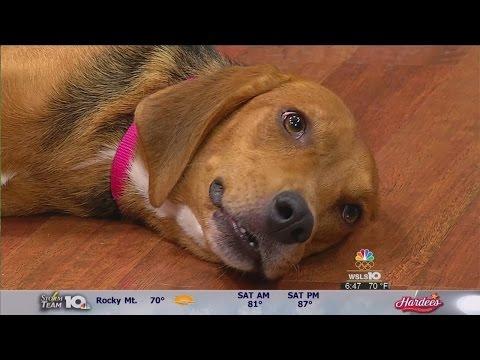 Meet this week's pet of the week from the Roanoke Valley SPCA: Georgia!