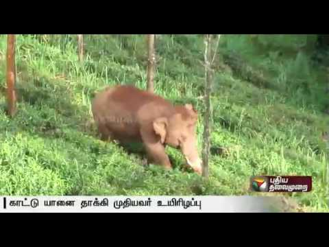 Man-succumbs-to-injuries-after-elephant-attack-in-Gudalur