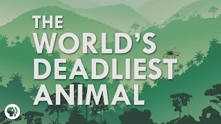 What's The Deadliest Animal In The World? (It's Okay To Be Smart)
